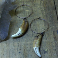 From the strife of howling wolf tongues. Coyote canine teeth, and tiny brass hoop earrings