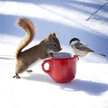 5D Diamond Painting Squirrel and Bird on a Red Cup Kit