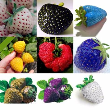100 pcs/bag Color Rain Bow Strawberry Seeds Fruit Multi-color Strawberries Seeds Flower Seed Garden Pots & Planters