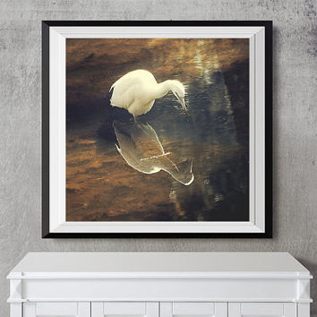"Egret Reflection Photograph - wildlife photography, bird, brown, gold, tan, cream home decor, nature wall art square print ""Into the Cosmos"""