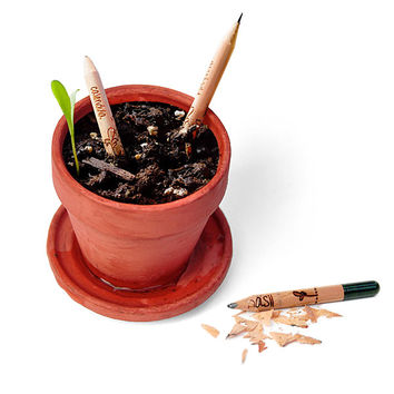 Sprout Growing Pencils - Herbs
