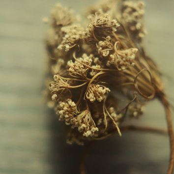 Dried botanical print- cream, brown, winter, floral, queen annes lace, rustic, romantic, winter decor, nature print, fine art print, 11x14