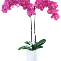 """31"""" Purple Phalaenopsis Artificial Orchid Arrangement - Symphony White - Modern - Artificial Flowers - by Orchid Diva"""