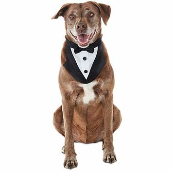 You & Me Dog Tuxedo Bandana | Petco