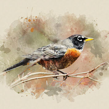 American Robin Watercolor Art, Robin Wall Art, Bird Prints, Fine Art, Watercolor Painting, American Robin, Bird Art Print, Wildlife Print