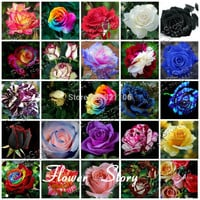 Free Shipping 25 Kinds Rose 500 seeds DIY Home Gardening & Decoration Bush Flower 25 Individual  Packs