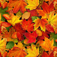 Elizabeth's Studios, Landscape Medley, Autumn Leaves, Multicolored Fall
