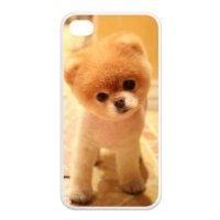 Boo The Dog Iphone 4 4s Case Boo Cute Dog Cases Cover at NewOne