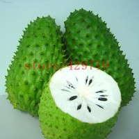 bonsai Fruit seeds 10 pcs  Graviola Soursop Guanabana Annona Muricata Tropical Seed