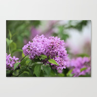 Lilac Bouquets Canvas Print by Theresa Campbell D'August Art