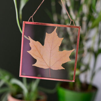 "Real pressed autumn leaf wall hanging | sugar maple | 4"" square glass with copper edging 