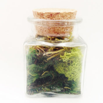 Tiny Terrarium with Real Moss Cork Top Square Glass Jar Miniature Spring Woodland Wedding Party Favor