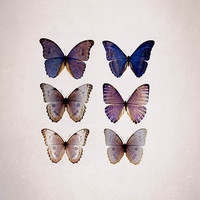 Butterfly Photography, violet and beige, Summer decor, Pastel, wall decor, Garden,  Blue Morpho Specimen