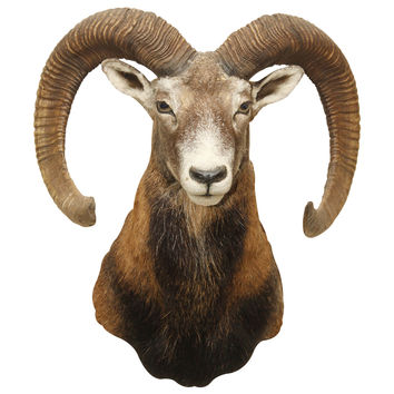 Another Ram Head wall decal