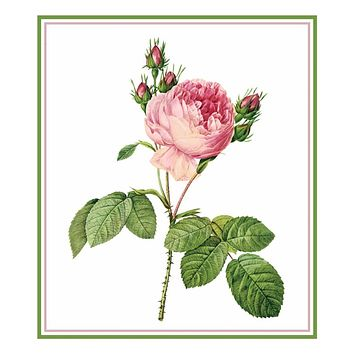 Cabbage Rose Flower Inspired by Pierre-Joseph Redoute Counted Cross Stitch Pattern