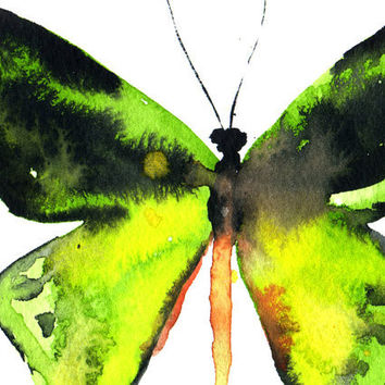 Butterfly Original Watercolor Painting