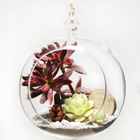 Beach Hanging Glass Bubble Succulent Sand Terrarium