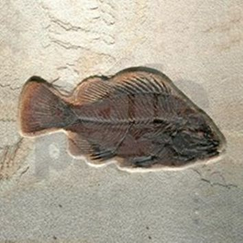 FISH FOSSIL ART TILE COASTER
