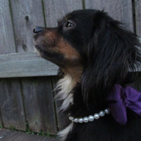 Dog Collar - MADE TO ORDER White Pearl Wedding Dog Collar and plum bow - Cute dog collar, Wedding dog collar