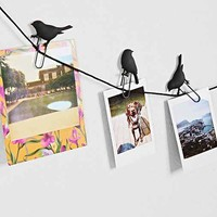 Birds on a Wire Photo Clip - Set of 8- Black One