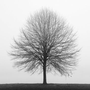 Black and white photography, tree, nature, trees, fog, landscape / SOLITUDE, 2013_ 12 x 12 print