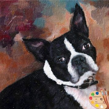 Boston Terrier  Dog Portrait 527