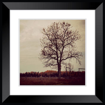 Landscape photography, Tree photography, Field photography, large rustic poster wall art home decor