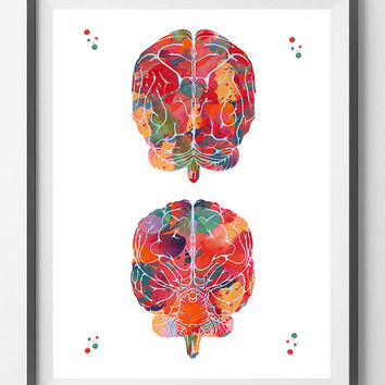 Brain watercolor print brain anatomy front view and back view poster cerebral cortex and cerebellum print medical art neurology wall art