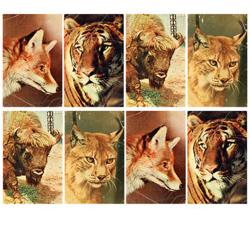 The Moscow Zoo (Photo by N. Nemnonov) - Set of 4 Vintage Postcards - Printed in USSR, Moscow, «Soviet Artist», 1969