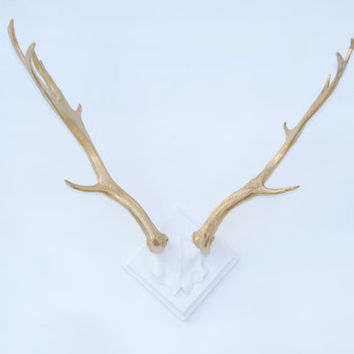 FAUX TAXIDERMY - Large Faux Deer Antlers - White Base and Gold Antlers - Resin Antler Rack Wall Mount LA0108