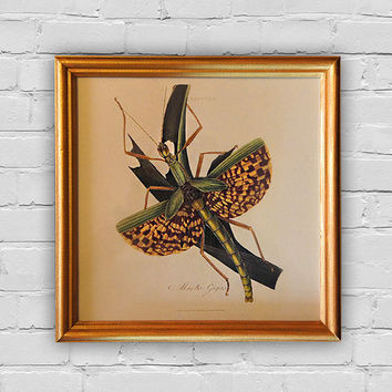 Vintage print: Phasma gigas (Syn. mantis gigas) by Edward Donovan. Wood frame with handmade painting in gold color. 8'x8' (20x20cm).