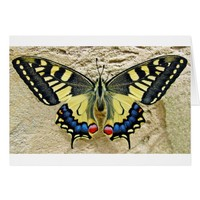 Yellow striped butterfly card
