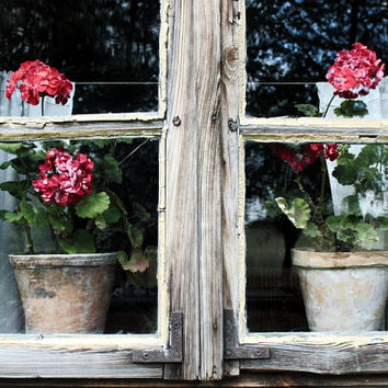 still life photography print primitives country decor rustic decor nature photography flower photography red flowers 4x6 5x7 6x8 8x10 10x15