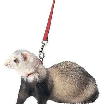 Marshall Ferret Harness and Lead - Red: 48""