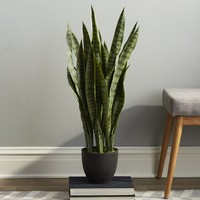 Sycamore Faux Sansevieria Floor Plant in Pot