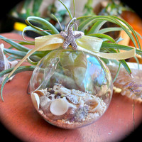 Seashell Christmas Ornament - Hawaiian shell bulb for tropical holidays, by Mermaid Tears Hawaii
