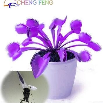 100pcs Promotion Rare Purple Dionaea Muscipula Giant Clip Venus Flytrap plants Bonsai Plants Flower plants Free Shipping Semente