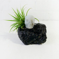 Crystal Agate Skull on Tektite Rock w/ Air Plant Garden