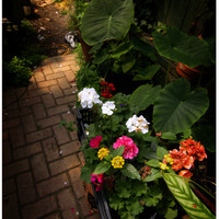 Flower Walkway Digital Download