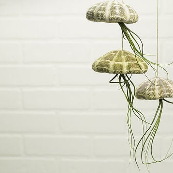Jellyfish Hanging Air Plant Trio Kit