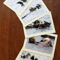 Five Sea Otter Note Cards Nature and Wildlife Photo Stationery Set Note Cards - Set VI