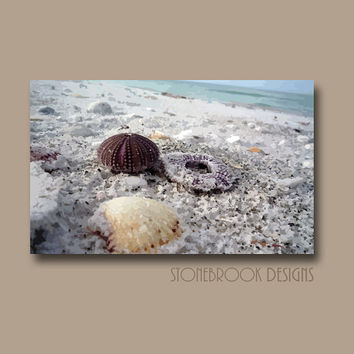 Seashell Wall Art CANVAS Coastal Nautical Abstract Painting Beach Ocean Artwork Water Waves Large Image Wrap Home Decor Free Shipping