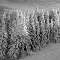 Winter Photograph, Black and White Landscape Photography, 20x24 Wall Art, Ski Lodge Decor, Snow Picture