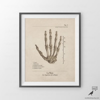 Anatomical Hand Print, Hand Anatomy, Vintage Illustration, Human Anatomical Chart, Vintage Inspired Medical illustration