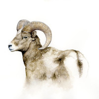 Bighorn mountain sheep watercolor art, ram print, sheep art print, woodlands animal watercolor print from original sheep watercolor painting
