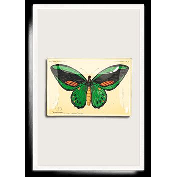 Green Butterfly Decoupage Glass Tray