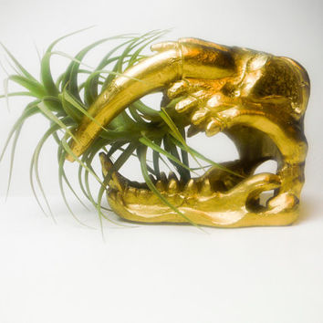 Saber Tooth Tiger Planter with Air Plant - Great Boyfriend Gift - Curiosities
