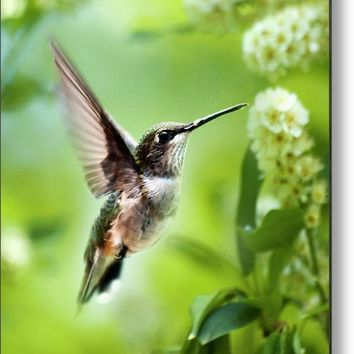 Peaceful Love Hummingbird Metal Print