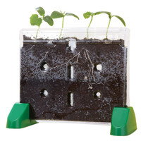 Educational Insights Sprout & Grow Window Science Project