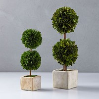 Boxwood Double Topiaries